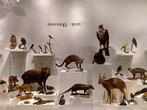 一群營養不良的動物們.jpg - 日誌用相簿