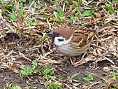 親子鳥類生態解說課程:鳥類生態解說課程 (13).JPG