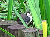 親子鳥類生態解說課程:鳥類生態解說課程 (14).JPG