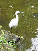 親子鳥類生態解說課程:鳥類生態解說課程 (16).JPG