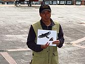 親子鳥類生態解說課程:鳥類生態解說課程 (21).JPG