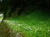 合歡高山之美:路邊野花