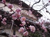 日本東京鎌倉:P1011404.JPG
