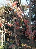 日本橫濱:P1010079.JPG