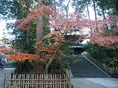 日本橫濱:P1010084.JPG