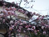 日本東京鎌倉:P1011329.JPG