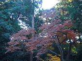 日本橫濱:P1010086.JPG