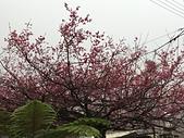 台灣屏東:IMG_2870.JPG