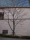 哈日族   日本控:PC082957.JPG