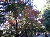 哈日族   日本控:PC083193.JPG