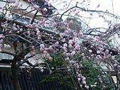 日本東京鎌倉:P1011326.JPG