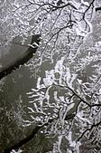 981219北插天山冰霜世界:981219-11.jpg