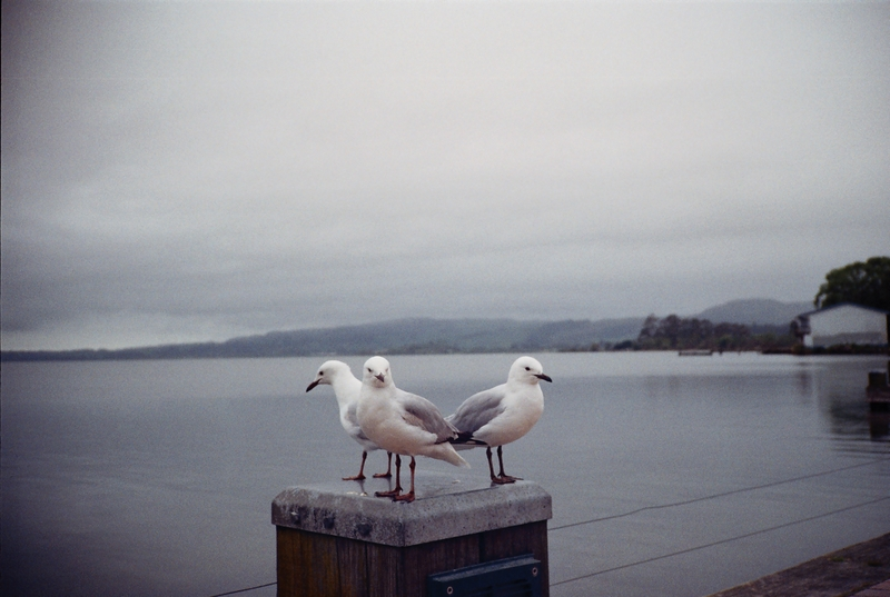 紐西蘭:8  -010.jpg