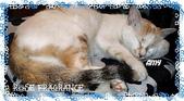 我の...貓...:a6.jpg
