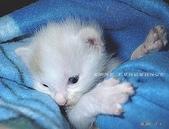 我の...貓...:我有一隻愛作怪的喵喵