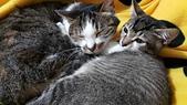 認養代替購買  CAT:20150206_154646.jpg