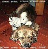 我の...狗...:dog1.jpg