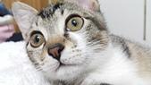 認養代替購買  CAT:20150125_182645.jpg