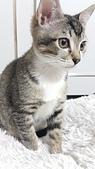 認養代替購買  CAT:20150125_182757.jpg