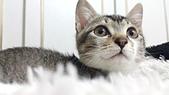 認養代替購買  CAT:20150125_182817.jpg