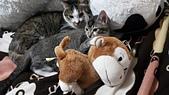 認養代替購買  CAT:20150128_001346.jpg