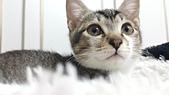 認養代替購買  CAT:20150125_182823.jpg