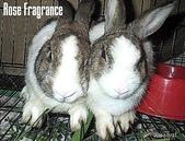 我の兔....:07270027.1.jpg
