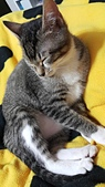 認養代替購買  CAT:20150219_002730.jpg