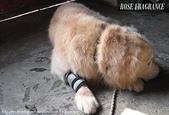 我の...狗...:A 011.1.jpg