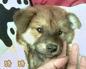 我の...狗...:CRIM0013.1.jpg