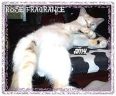 我の...貓...:a4.jpg
