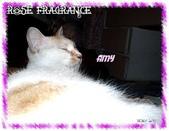 我の...貓...:a3.jpg