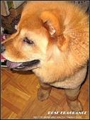 我の...狗...:d1.jpg