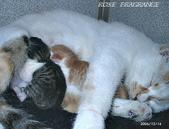 我の...貓...:12160012.2.jpg