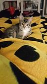 認養代替購買  CAT:20150218_005956.jpg