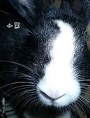 我の兔....:小黑
