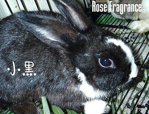 我の兔....:07270023.1.jpg