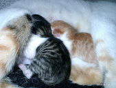我の...貓...:12160014.2.jpg