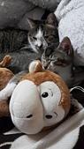 認養代替購買  CAT:20150128_001410.jpg