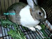 我の兔....:momin