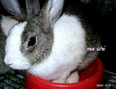 我の兔....:mochi3