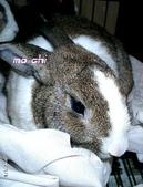 我の兔....:mochi1