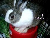 我の兔....:mochi