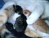 我の...貓...:12160011.2.jpg