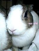 我の兔....:mochi2