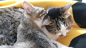 認養代替購買  CAT:20150206_154754.jpg