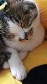 認養代替購買  CAT:20150206_154841.jpg