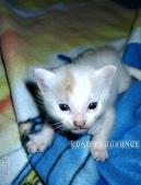 我の...貓...:CAT6.jpg