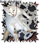 我の...貓...:a5.jpg