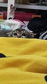 認養代替購買  CAT:20150210_151838.jpg
